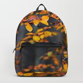 two Backpack
