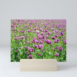 Purple Poppies Mini Art Print