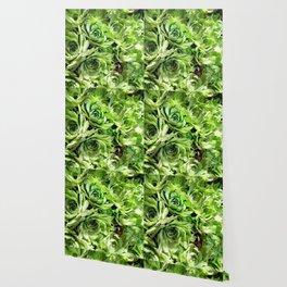 GREEN HENS N' CHICKS SEDUMS-SUCCULENTS Wallpaper