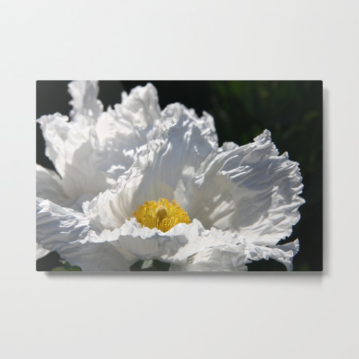 Poppy - White Metal Print