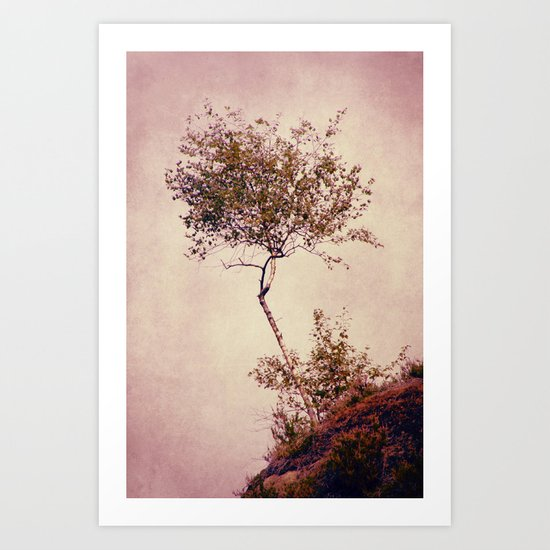 betulla Art Print