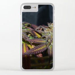 Mimosa Clear iPhone Case