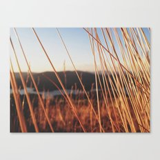 fine looking weeds  Canvas Print
