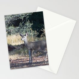 Deer in Payson, Arizona Stationery Cards