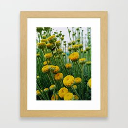 Billy button flower garden with ladybug Framed Art Print