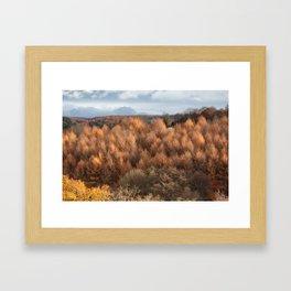 Autumn Larch Framed Art Print
