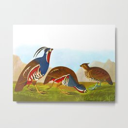 Plumed Partridge and Thick-legged Partridge Metal Print