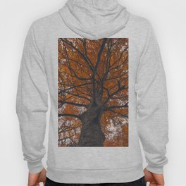 Fall tree, Autumn landscape Hoody