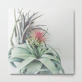 Air Plant Collection II Metal Print