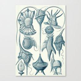Ernst Haeckel Peridinea Plankton Canvas Print