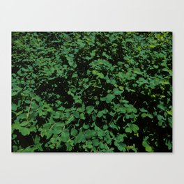 The Green Brush Canvas Print