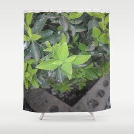 Pretty green. Shower Curtain