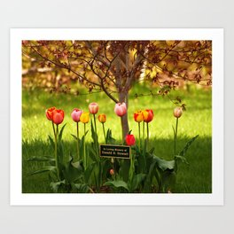 Tulips with a Tribute Art Print