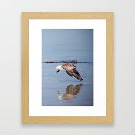 A Startled Sanderling Framed Art Print