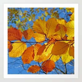Autumn Photography - Yellow And Orange Leaves Art Print