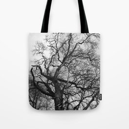 Old oak tree. Moscow district. Tote Bag