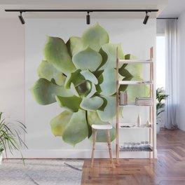Succulent Wall Mural
