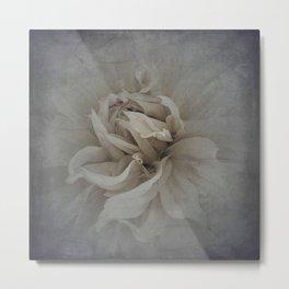 Dusty Rose Metal Print