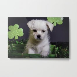 White Mixed Breed Puppy Sitting in a Green St. Patrick's Day Basket Metal Print