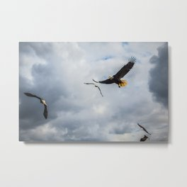Eagles Metal Print