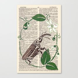 Entomologic Pepper Weevil Canvas Print