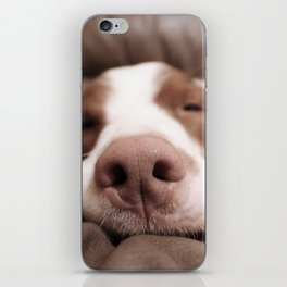 Funny Dog Photography Brittany Spaniel Close Up  iPhone Skin