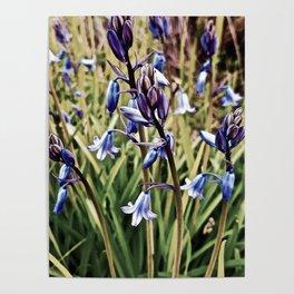 Bluebells, Magical Flowers Of Spells Poster