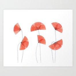 Flanders poppy, corn poppy, flower Art Print