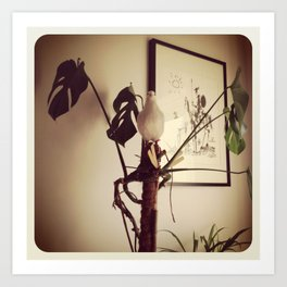 At home with dove Art Print