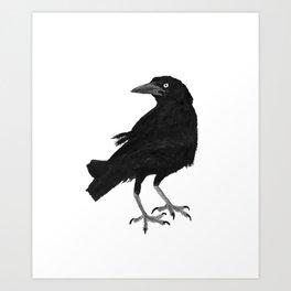 Blackbird - Tordo Art Print