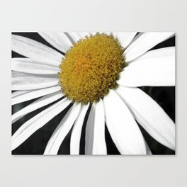 White and Curly Canvas Print