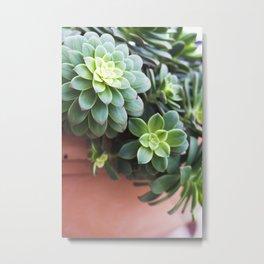 Succulent Loveliness Metal Print