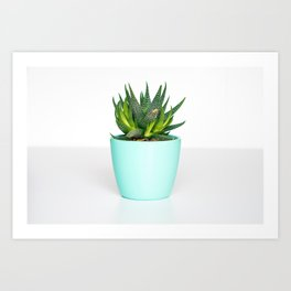 Succulent in a Blue Pot Art Print