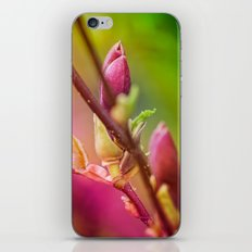 bud iPhone & iPod Skin