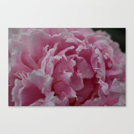 Frilly Pink Flower Canvas Print