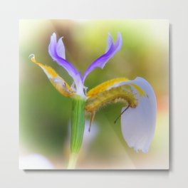 Tussock Caterpillar and Fairy Iris II Metal Print