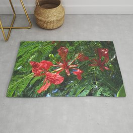 Royal Poinciana - Delonix regia Rug