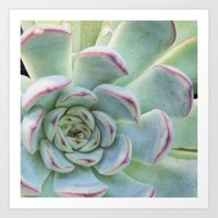 succulent Art Prints featuring Succulent by Tammy Franck