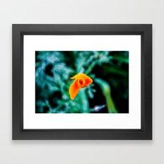 Goldfish Poppy Framed Art Print