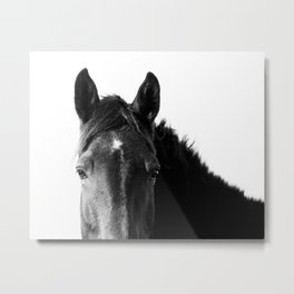 Horse in Black and White Metal Print