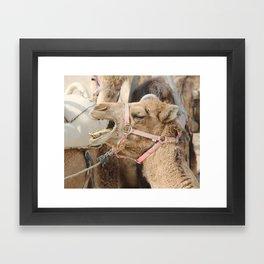 Ornery Camel Framed Art Print