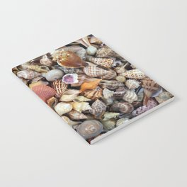 Seashell Collection from Florida Notebook