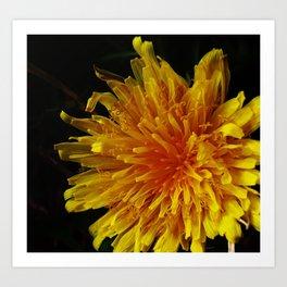 Dandelion Sun--Macro Photography Prints Art Print