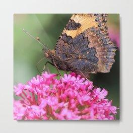 Butterfly on valerian flower Metal Print