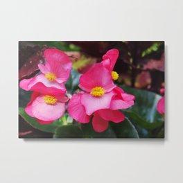 Closeup Pink Flower, Yellow Core Metal Print