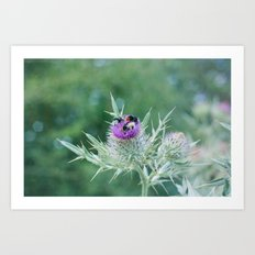 bumblebees 017 Art Print