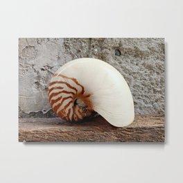 Seashell Series (No. 1) Metal Print