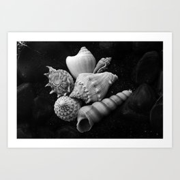 Shell No.10 Art Print