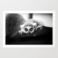 The Lemur Art Print