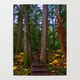 Giant Cedars Boardwalk in Revelstoke BC, Canada Poster